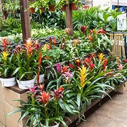 flowers plants nursery garden