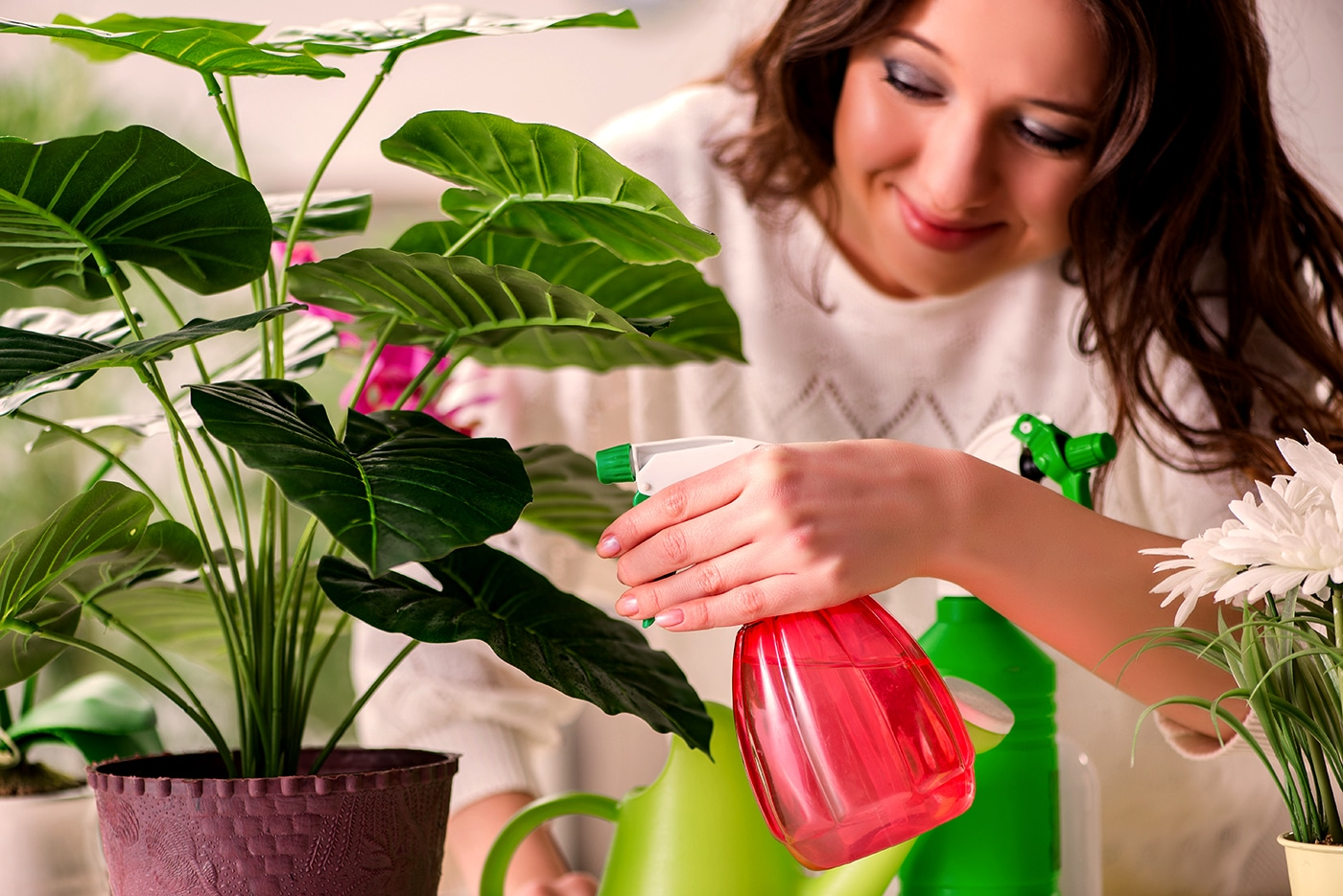 3 Easy Ways to Keep Your Plants Healthy